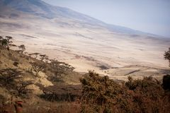 Vista pitoresca ao parque nacional de Ngorongoro fotos de stock royalty free