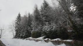 Vista pitoresca do rio de fluxo r?pido com espuma criadora atual da velocidade na floresta de surpresa do inverno com ?rvores pan vídeos de arquivo