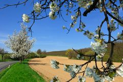 Vista pittoresca del campo arato Immagini Stock