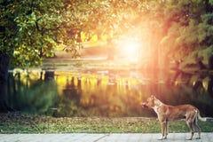 Vista pittoresca dell'autunno dorato Fotografia Stock