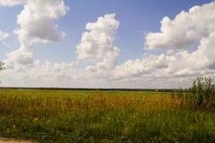 Vista pittoresca di bello campo di erba verde nell'ambito del cielo nuvoloso e del sole blu Periferia di Mosca, Russia Fotografie Stock Libere da Diritti