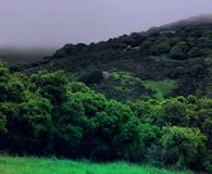 Vista Point. Beautiful green after a soft rain Royalty Free Stock Photo