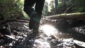 Vista posterior de un hombre que camina en bosque verde entre la corriente en la primavera con la luz del sol en el fondo cantida almacen de metraje de vídeo