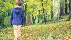 Vista posterior del muchacho rizado-cabelludo 8 años que caminan solamente en el parque del otoño Hojas del amarillo en la tierra fotos de archivo