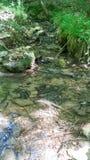 Vista posteriore del fiume di legni Fotografie Stock Libere da Diritti