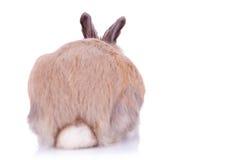 Vista posteriore di piccolo coniglio marrone sveglio Immagini Stock