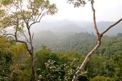 Vista primigenia della foresta della giungla con sbiadire le colline nel fondo immagine stock