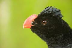 Vista principal do pássaro à esquerda. Imagem de Stock