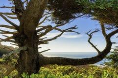 Vista quadro árvore do oceano fotografia de stock