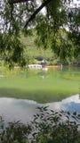 Vista quadro árvore - Dragon Pool Lijiang preto imagens de stock