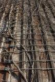 Vista que olha acima das videiras inoperantes que crescem acima e através das correias do metal em um silo concreto velho fotografia de stock
