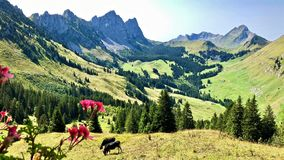 Vista que sorprende de montañas suizas imagenes de archivo