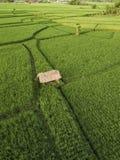 Vista a?rea de los campos del arroz, Bali, Indonesia imagen de archivo libre de regalías