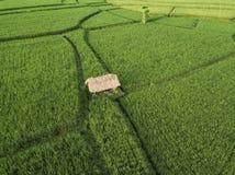 Vista a?rea de los campos del arroz, Bali, Indonesia fotos de archivo libres de regalías