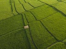 Vista a?rea de los campos del arroz, Bali, Indonesia foto de archivo libre de regalías