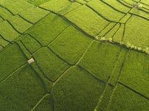 Vista a?rea de los campos del arroz, Bali, Indonesia foto de archivo