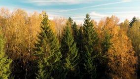 Vista a?rea del bosque del oto?o con los ?rboles verdes y amarillos almacen de metraje de vídeo