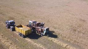 Vista a?rea del campo de trigo maduro de oro de la cosecha mec?nica de la agricultura de la m?quina segadora metrajes