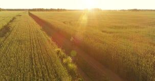 A vista a?rea no menino novo, de que monta uma bicicleta atrav?s de um campo de grama do trigo na estrada rural velha Luz solar e filme