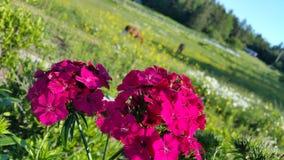 Vista romântica Fotografia de Stock