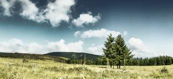 Vista rurale idilliaca dei campi e degli alberi graziosi Fotografia Stock