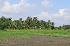 Vista rurale nel Vietnam con la casa ed il campo Fotografia Stock