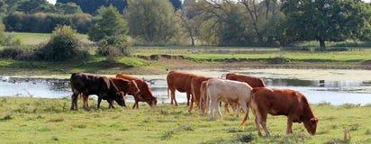 Vista rurale pacifica da un lago Fotografia Stock