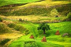 Vista rurale scenica del paesaggio verde di estate Immagini Stock