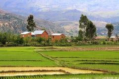 Vista rurale tipica del Madagascar Immagine Stock Libera da Diritti