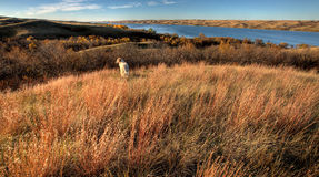 Vista Saskatchewan di autunno Fotografie Stock Libere da Diritti
