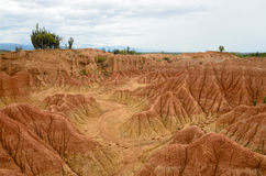 Vista sbalorditiva alle sabbie variopinte della foresta asciutta tropicale di Tatacoa Fotografie Stock