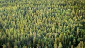 Vista sbalorditiva da una foresta fotografia stock libera da diritti