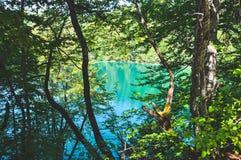 Vista scenica dei laghi Plitvice dietro gli alberi parco nazionale, Croazia immagini stock libere da diritti