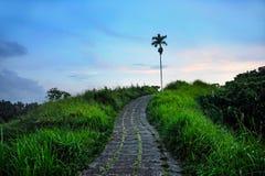 Vista scenica del bello e paesaggio fresco della natura di trekking della passeggiata della cresta di Ubud e del percorso di escu Immagine Stock Libera da Diritti