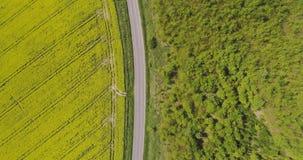 Vista scenica del giacimento del canola contro il cielo stock footage