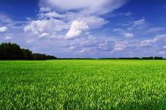 Vista scenica del giacimento del cereale Fotografie Stock Libere da Diritti