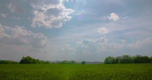 Vista scenica del giacimento di grano contro il cielo stock footage
