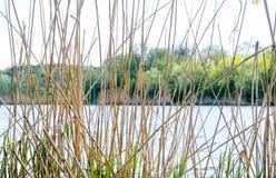 Vista scenica del lago attraverso le canne alte Fotografie Stock Libere da Diritti
