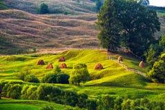 Vista scenica del paesaggio verde di estate Fotografia Stock