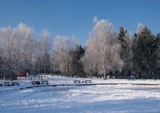 Vista scenica del parco di inverno Fotografia Stock Libera da Diritti