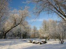 Vista scenica del parco di inverno Fotografie Stock