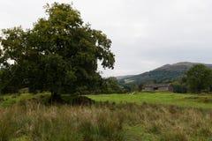 Vista scenica dell'albero e della Camera nella campagna di Ambleside, Cumbria Fotografia Stock