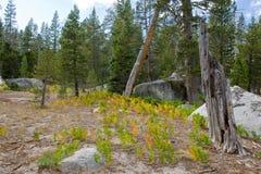 vista scenica della foresta Fotografie Stock
