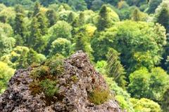 Vista scenica della foresta della montagna Fotografie Stock