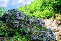 Vista scenica della foresta della montagna Fotografia Stock