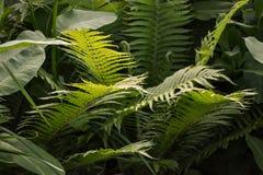 Vista scenica della giungla con il periodo di estate delle felci Fotografia Stock