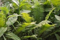 Vista scenica della giungla con il periodo di estate delle felci Fotografie Stock