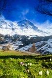 Vista scenica delle alpi svizzere Fotografia Stock