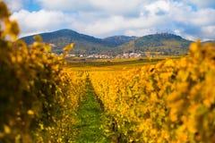 Vista scenica delle colline dell'Alsazia Fotografie Stock Libere da Diritti
