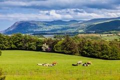 Vista scenica delle montagne e della campagna di Lingua gallese Fotografie Stock